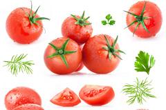 西红柿和茴香叶样式大集合