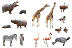 8种水陆两栖热带动物高清图片
