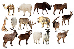 15种常见高原野生动物高清图片