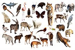 31种野生动物昆虫飞禽高清图片