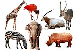 7种野生动物高清图片