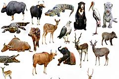 20种亚洲野生动物高清图片