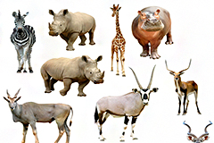 14种野生动物高清图片