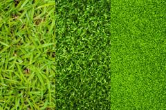 3张绿色草坪高清图片素材