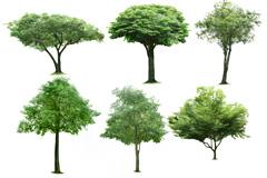 9棵不同品种绿树高清图片