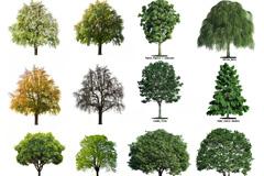16棵树木高清图片