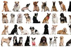 450只宠物狗品种图片大全