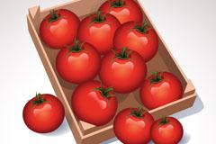 精美红色西红柿矢量素材