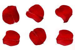 9个红色玫瑰花瓣高清图片