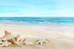 精美沙滩和贝壳高清图片下载