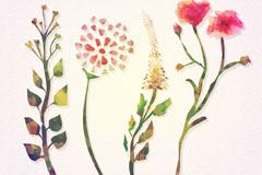 4款彩色花卉设计矢量素材