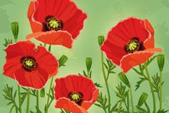 4朵红色罂粟花矢量素材