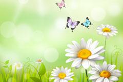 白色雏菊花丛和蝴蝶矢量素材
