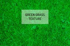逼真绿色草坪背景矢量素材