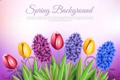 春季郁金香和风信子矢量素材