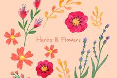 12款手绘花卉和香草矢量素材