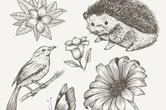 6款手绘动植物设计矢量素材