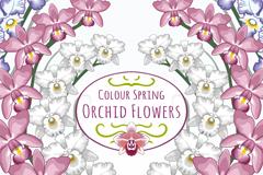 彩色对称春季兰花矢量素材