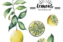 4款水彩绘黄色柠檬矢量素材