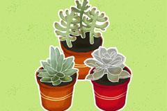 3盆水彩绘多肉植物矢量素材