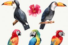 水彩绘2个大嘴鸟和3个鹦鹉设计矢量素材