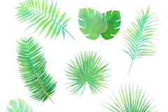7款水彩绿色热带植物叶子矢量素材