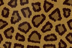 创意猎豹花纹背景矢量素材