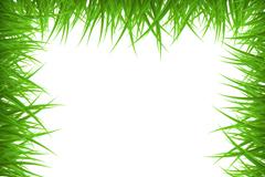创意绿草空白框架背景矢量素材
