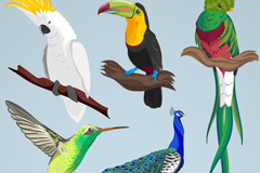 5款彩色鸟类设计矢量素材