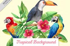 3只水彩绘热带鸟类和朱槿矢量图