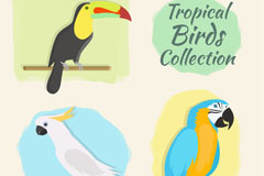 3款彩色热带鸟类矢量素材