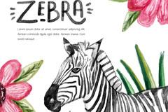 水彩绘斑马设计矢量素材