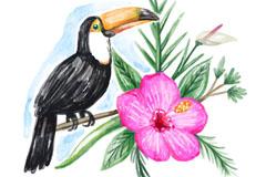水彩绘大嘴鸟和花卉矢量素材