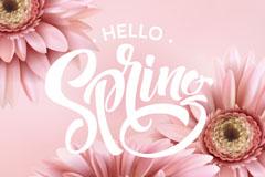 3朵春季淡粉色非洲菊矢量素材