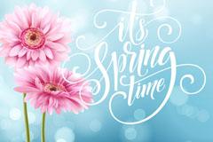两朵春季时光粉色非洲菊矢量素材