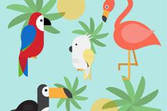 4款彩色热带鸟类设计矢量素材