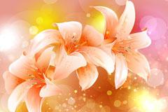 3朵美丽百合花和光晕矢量素材