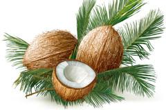 新鲜椰子和叶子矢量素材