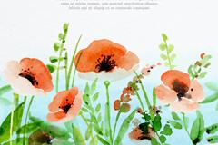 水彩绘罂粟花丛矢量亚虎娱乐