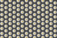 扁平化雏菊花朵无缝背景矢量图