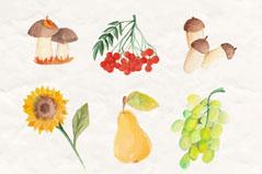 6款水彩绘秋季植物与水果矢量图