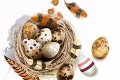 创意鸟窝鸟蛋和羽毛矢量素材