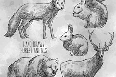 5款手绘森林动物矢量素材