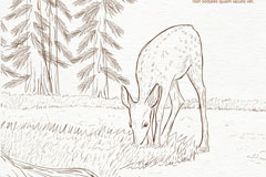 手绘森林中食草的鹿矢量素材