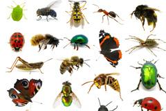 50种常见昆虫高清图片下载