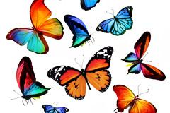 15只缤纷蝴蝶高清图片