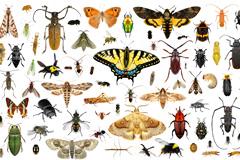 100种蝴蝶甲虫等昆虫高清图片下