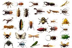 36种甲虫类昆虫高清图片