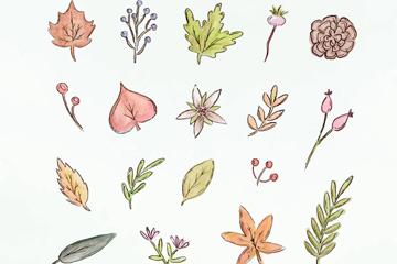 18款彩绘秋季叶子和花朵元素矢量素材