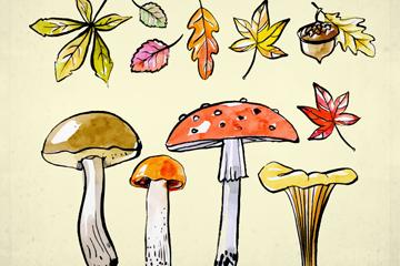 7款彩绘秋季树叶和4款蘑菇矢量图